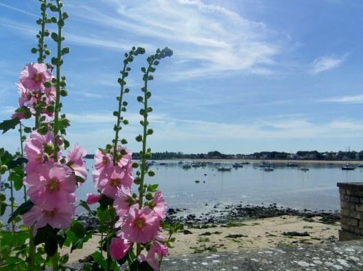 des roses en bord de plage 3