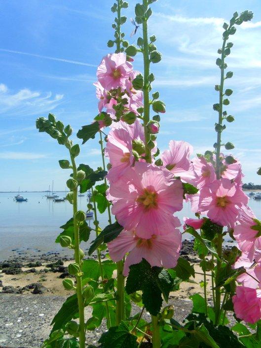 des roses et des bateaux 4