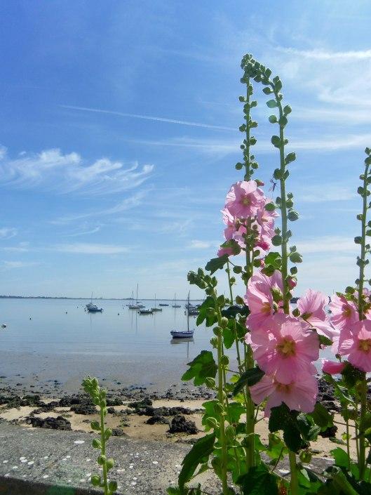 des roses et des bateaux