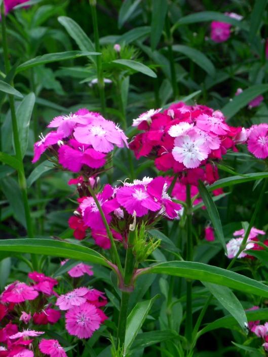 petites fleurs roses