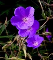fleurs, de l'été