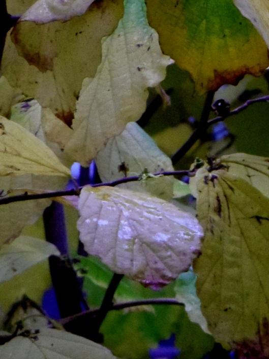 feuilles instants chat bleu