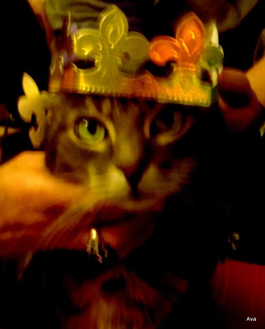Bilou le roi des chats