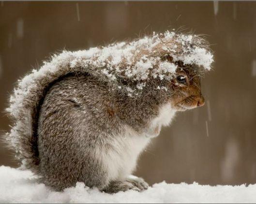 écureuil_neige_hiver