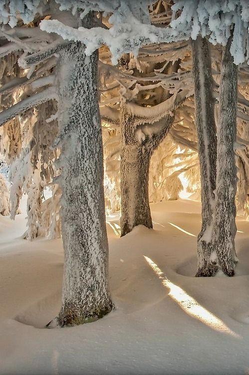 winter_hiver_neige_arbre