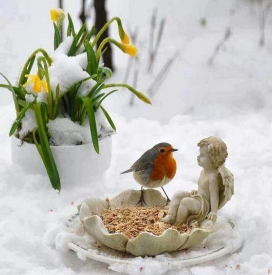 oiseau_hiver_neige