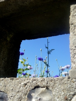window_in_picardie