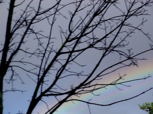 arc-en-ciel, rainbow