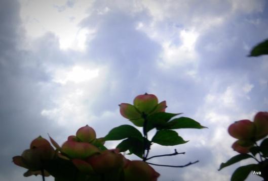 spring, flower, sky