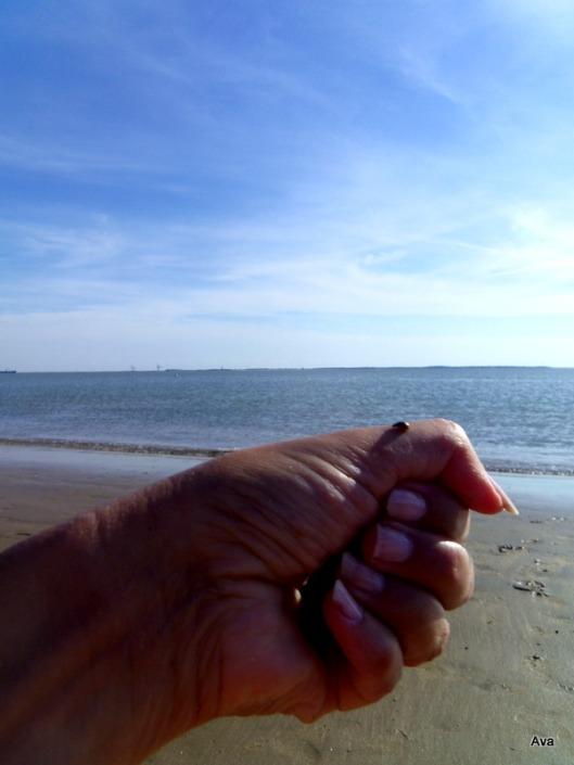 coccinelle de plage