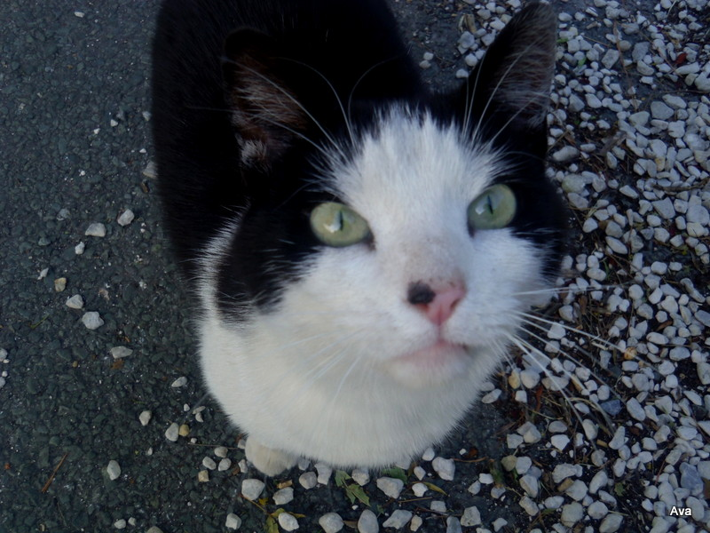 chat, yeux doux