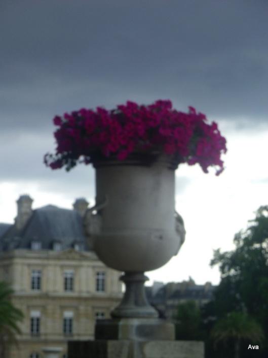 pot de fleurs, sénat