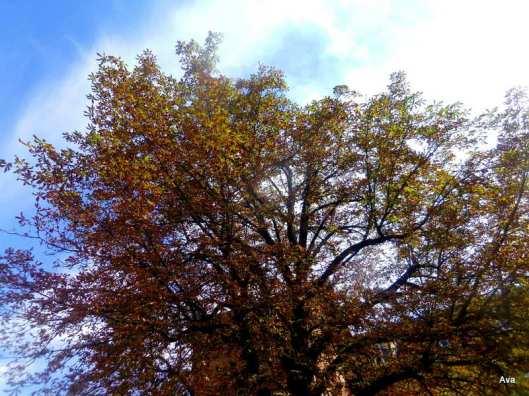 arbre, automne, couleurs
