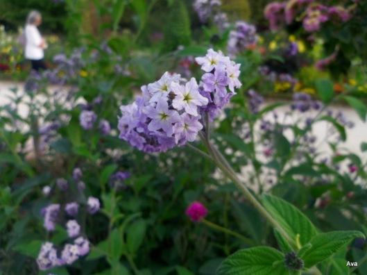 petite fleur du dimanche