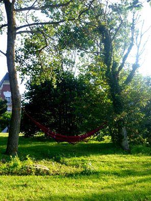 arbre à hamac