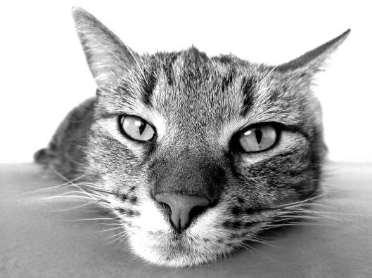 cat-98359_1280