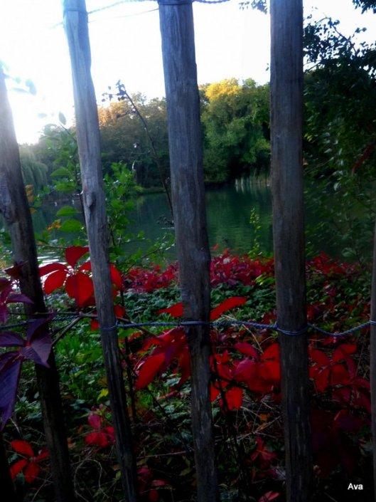 automne, arbuste, couleurs
