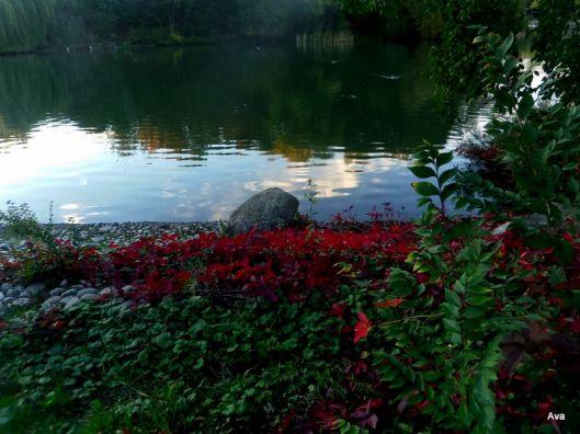 feuilles, couleurs, automne