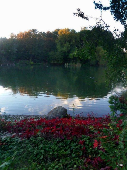 feuilles, couleurs, parc, automne
