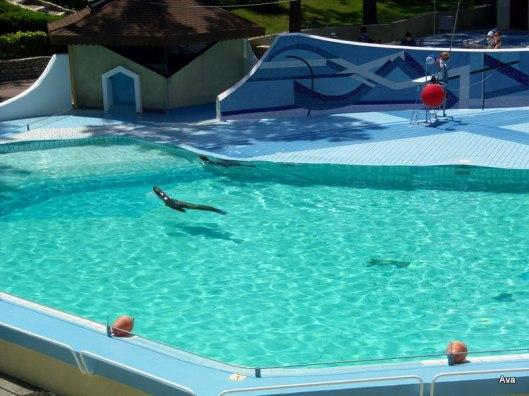 phoque du zoo de la Palmyre charente Maritime