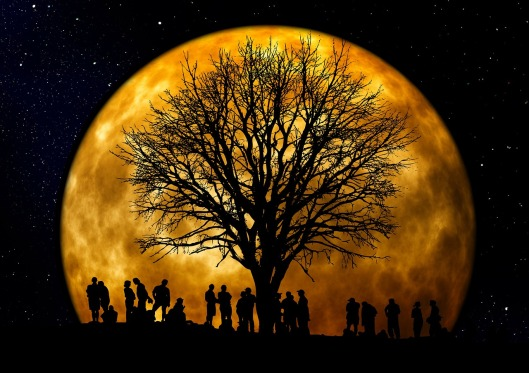 tree-66465_1280