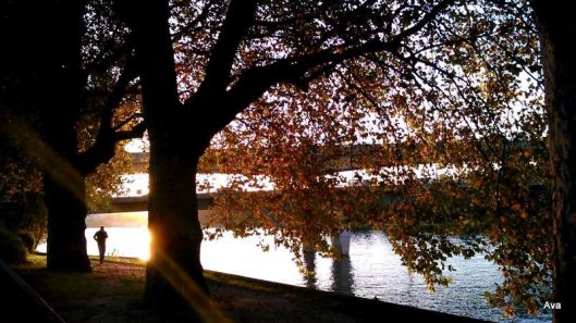 défi arbre, bord de Seine