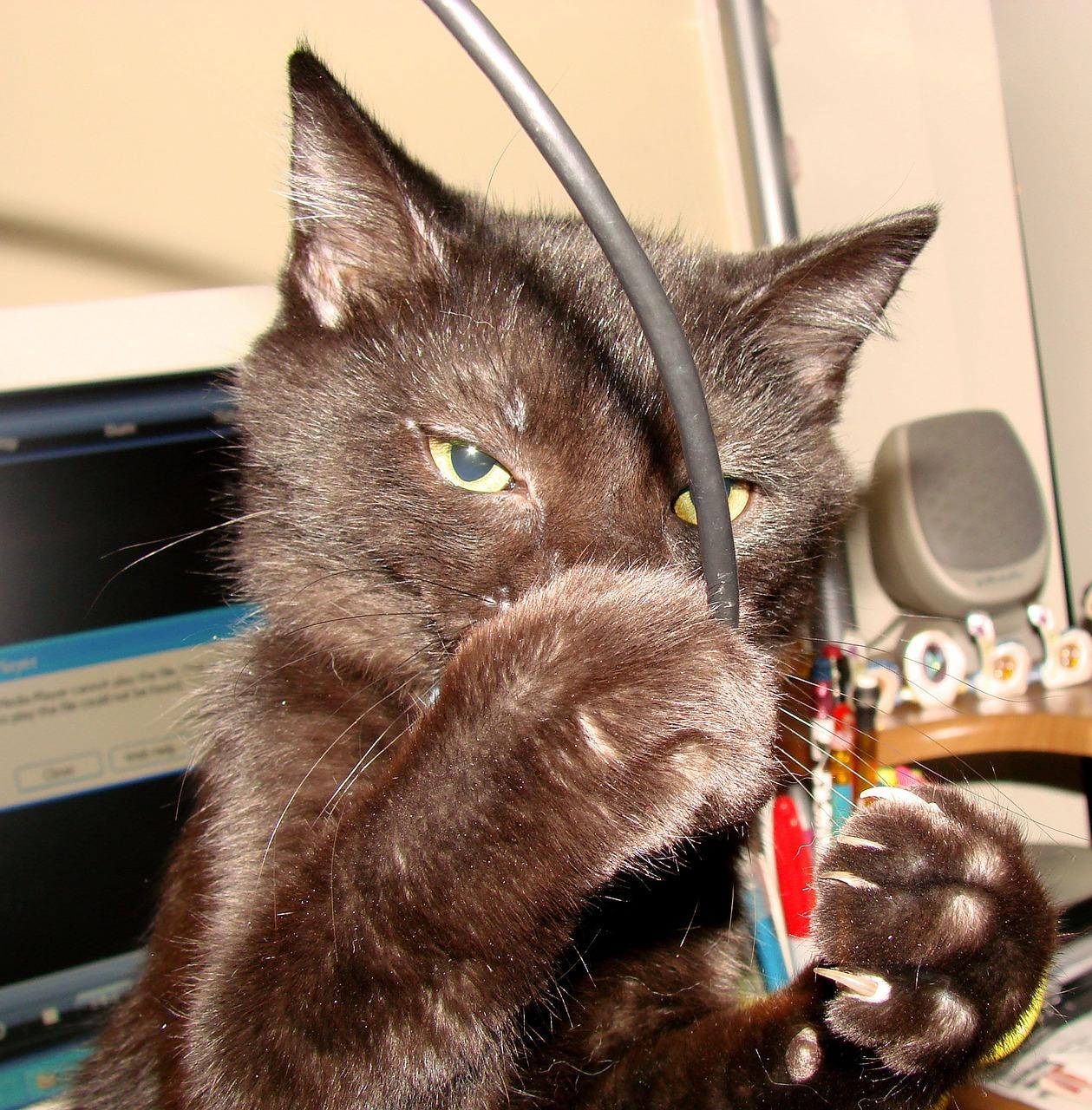 cat-70736_1280