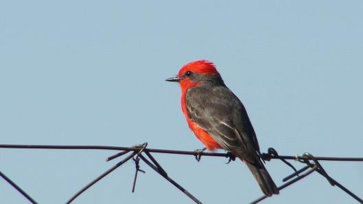bird-435836_1280