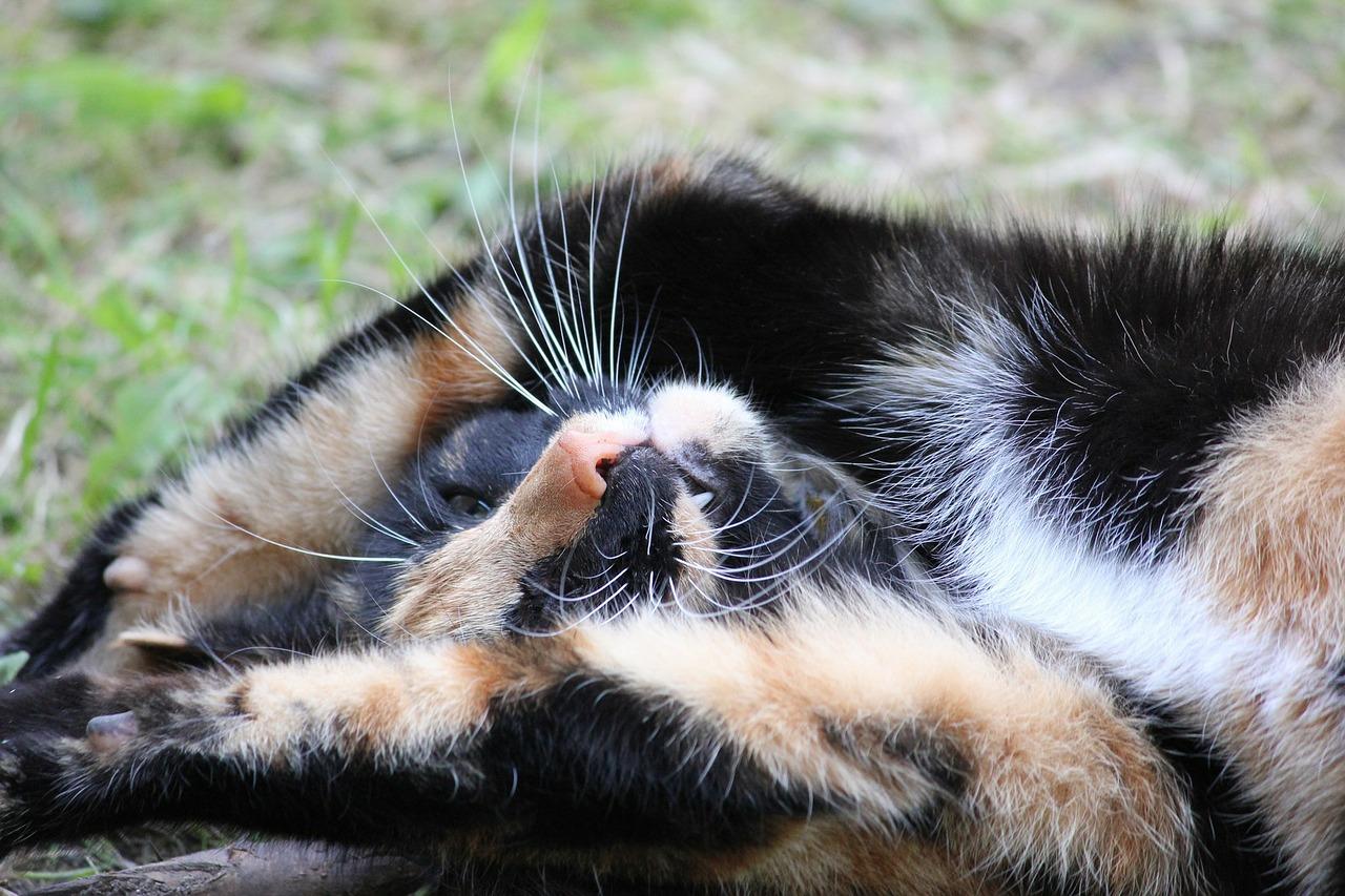cat-71077_1280