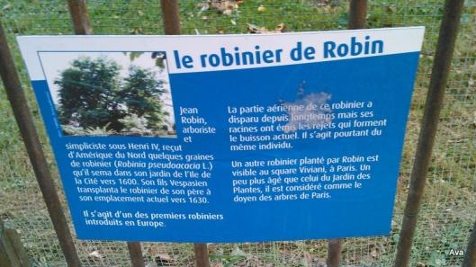 pancarte robinier de robin