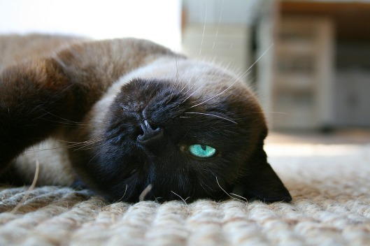 cat-103390_1280