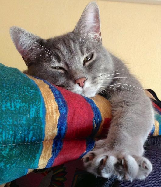 cat-319699_1280