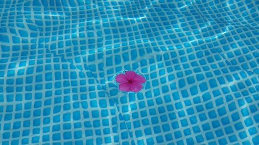 flower-404372_1280
