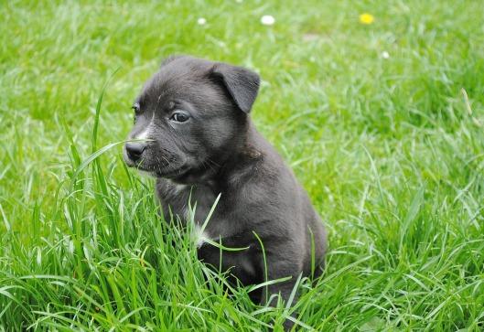 puppy-346308_1280