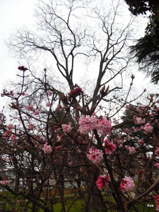 fleurs roses de printemps