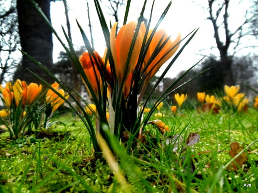 fresh flowers under the rain