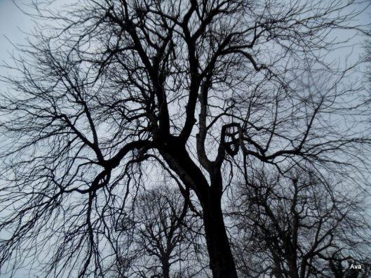 arbre vivant