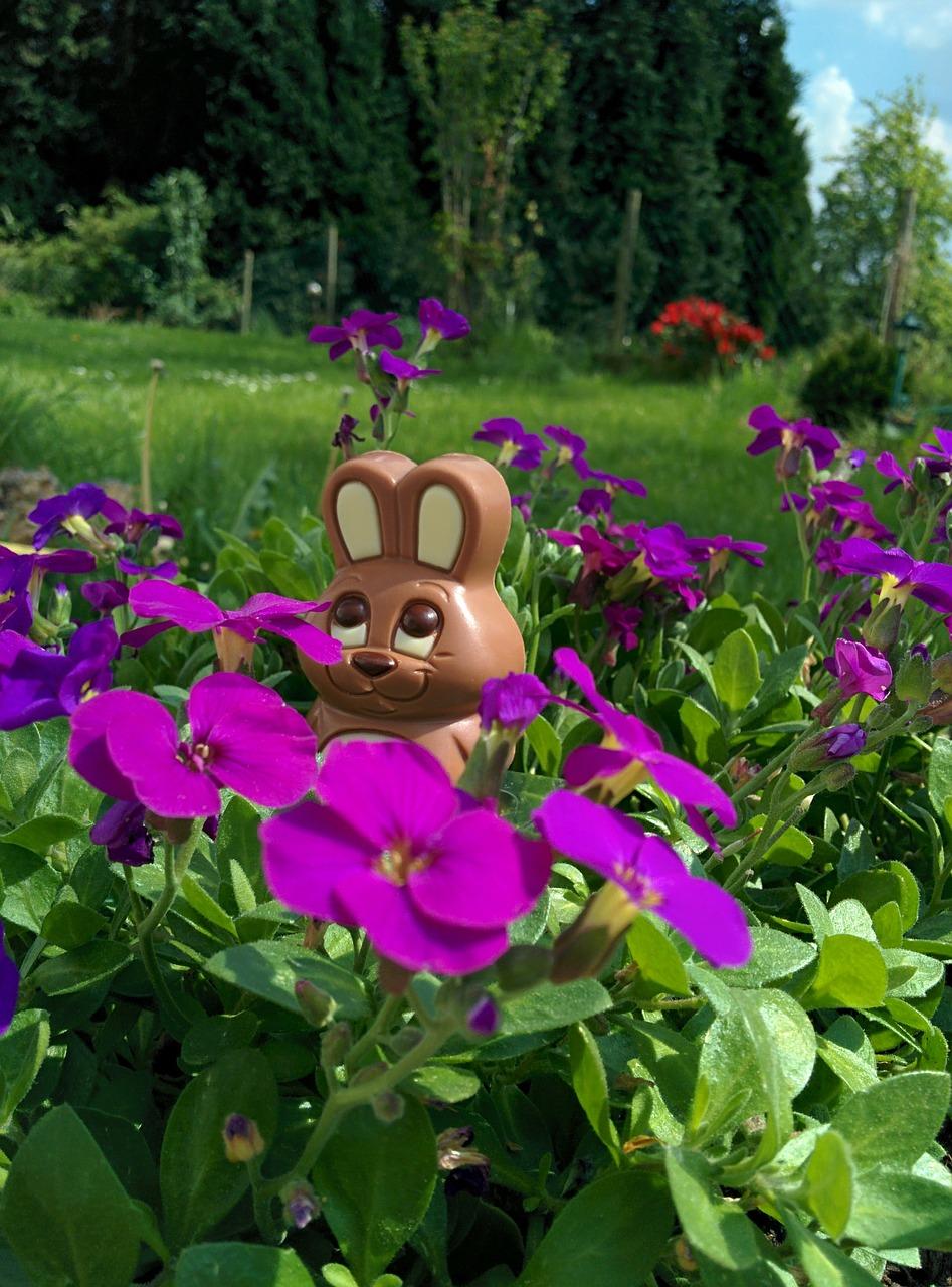 chocolate-bunny-329303_1280