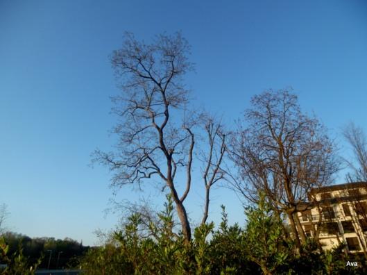 arbres du printemps