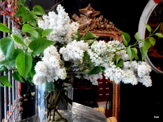 lilas blanc et meubles anciens