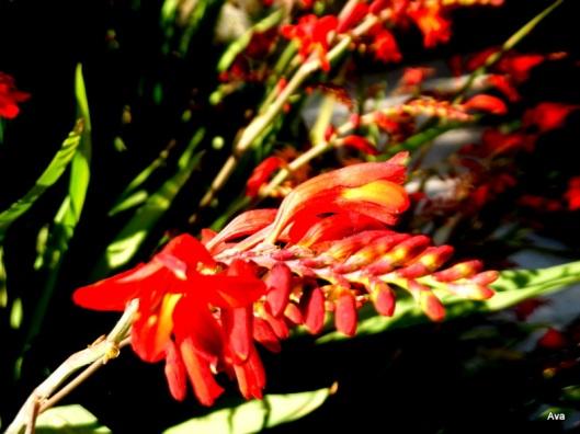 fleur rouge atypique