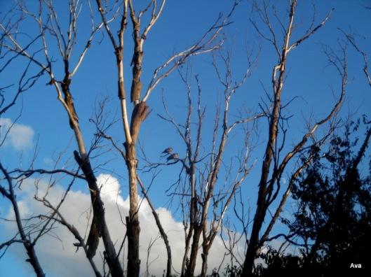 soleil, arbre mort