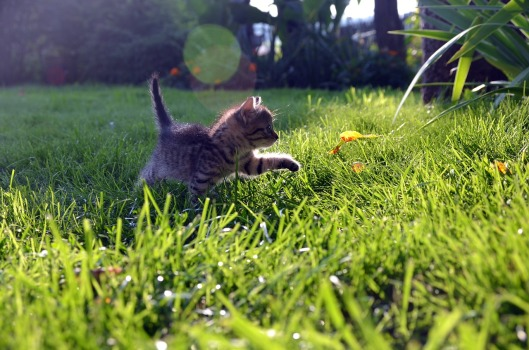 cat-727266_1280