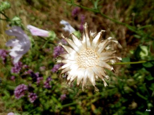 fleur en or