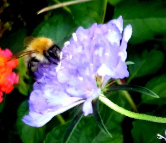 petite abeille au travail