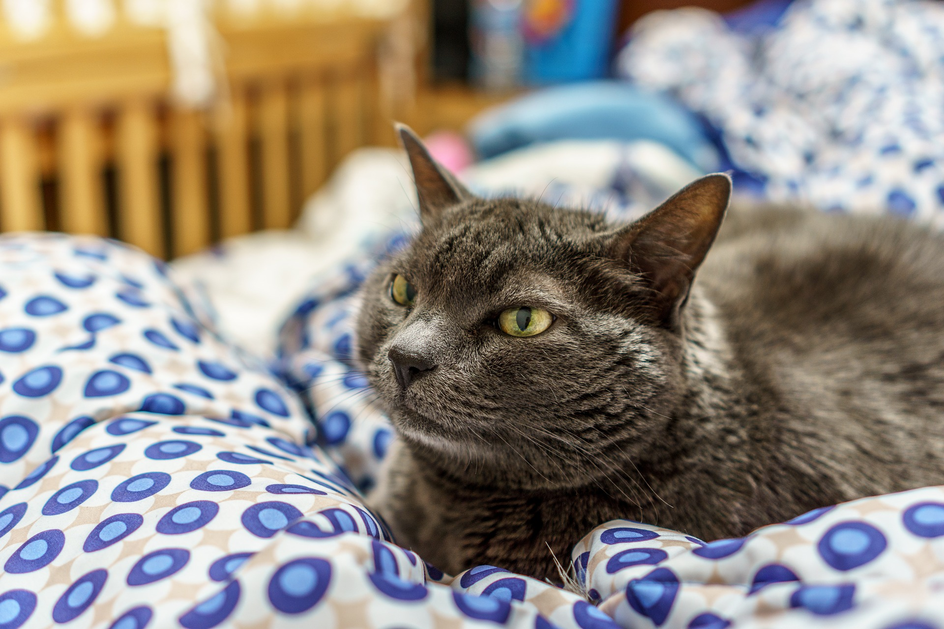 cat-933437_1920