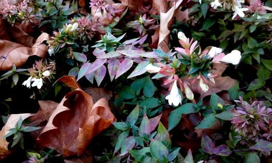 fleurs blanches de haies 2