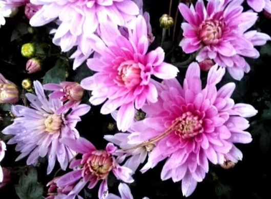 fleurs de commémoration 2
