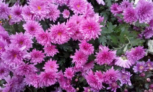 fleurs de commémoration 3