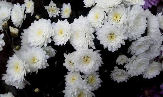 fleurs de commémoration 4